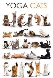 yoga kitties